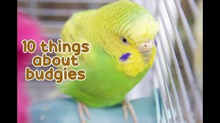 Download 10 Interesting Facts About Budgies 😇 Video