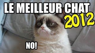 Download Meilleur Vidéos de chat 2012 Video