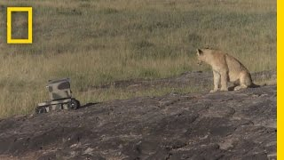 Download Photographing Lions With Technology | National Geographic Video
