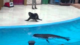 Download Sea Lions LIVE Goes Wrong Video