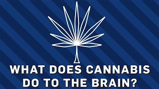 Download What Does Cannabis Do To The Brain? | Brit Lab Video