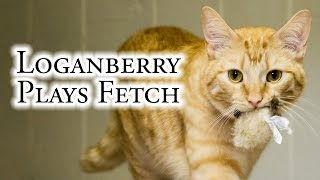 Download Loganberry Plays Fetch Video