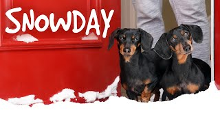 Download Ep 4. The Dogs Get a SNOWDAY!! - Cute Wiener Dog Video Snow Day Video