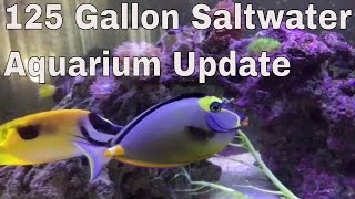Download 125 gallon saltwater aquarium full update : rotter tube reef Video