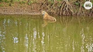 Download Seth loves Tiger Lake! Video