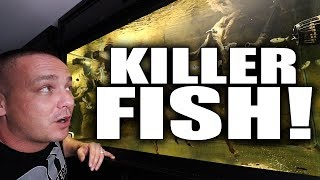 Download AFTER 16 YEARS, I FINALLY FOUND THIS FISH!!! | The King of DIY Video