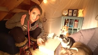 Download Making A Tiny Living Room For My Dogs Video