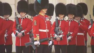 Download Irish Guards Video