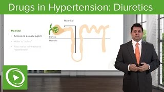 Download Drugs in Hypertension: Diuretics – Cardiovascular Pharmacology | Lecturio Video