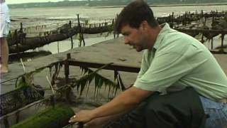Download Shellfish Aquaculture: Tools, Tips and Techniques Video