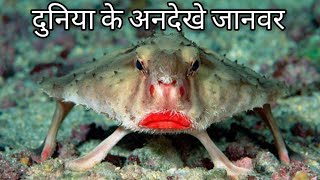 Download Top 7 Antique Creatures Of The World.[HINDI] Video