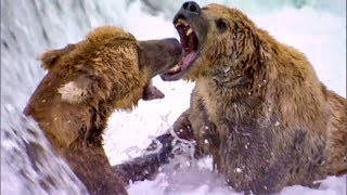 Download Top 5 Most Dangerous River Moments | BBC Earth Video