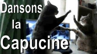 Download DANSONS LA CAPUCINE - PAROLE DE CHAT Video
