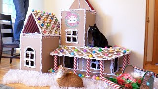 Download EPIC DIY Gingerbread House for Cats! Video