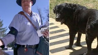 Download This Mailman Noticed How His Favorite Dog Was Changing Then He Saw What The Owners Were Doing Video
