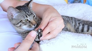 Download 子猫れお 猫部屋最後の日 【瀬戸のれお日記】 Video