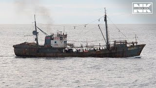 Download ILLEGAL FISHING BECOMES NEW OBSTACLE IN PYONGYANG-TOKYO TALKS Video