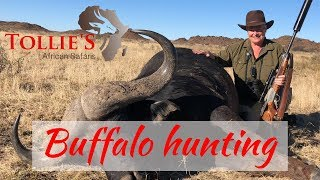 Download Cape Buffalo Hunting in Africa | Buffalo Hunt at Tollies African Safaris Video