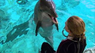 Download Super Smart Dolphin Answers Questions | Extraordinary Animals | Earth Video