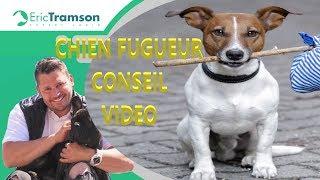 Download POURQUOI MON CHIEN EST FUGUEUR ET COMMENT FAIRE POUR L EDUQUER? Video