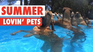 Download Summer Lovin' Pets Funny Pet Video Compilation 2017 Video
