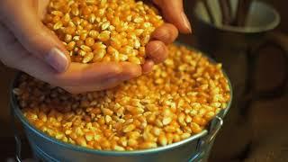 Download Hithit.cz - Ochutnej vykoupaný popcorn Mais Video