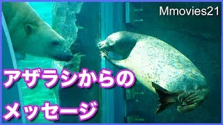 Download ホッキョクグマとアザラシ ガラス越しに見せ合う Polar Bear & Spotted Seal Video