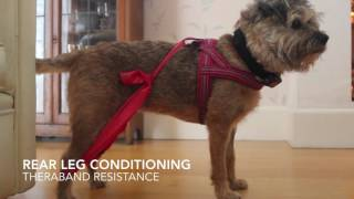 Download Exercises for dogs with joint issues Video