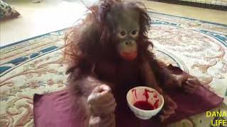 Download Дана и борщ. Парк львов Тайган. Orangutan Dana and borscht Video