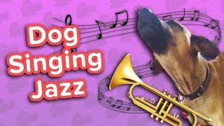Download Dog Jazz & Bug-Eyed Kittens! // Funny Animal Compilation Video