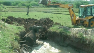 Download Elephant and Calf Rescued From Well After Two Days Video