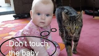 Download Amazing Cat protecting babies Video