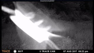 Download Strange creatures captured on Trail camera (What the hell is this thing?) Video