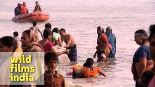 Download Taking a holy bath: Gangasagar mela Video