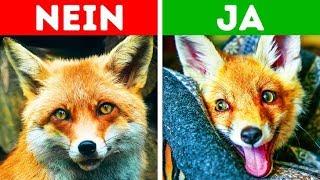 Download 10 exotische Haustiere, die erlaubt sind Video