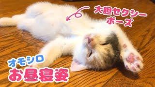 Download 子猫のぽてと面白いお昼寝姿 Video