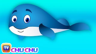 Download Blue Whale Nursery Rhyme | ChuChuTV Sea World | Animal Songs & Nursery Rhymes For Children Video