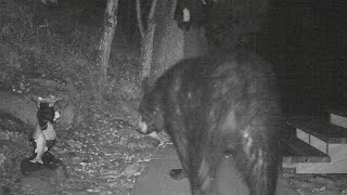 Download Wildlife in the Backyard at Night! Video