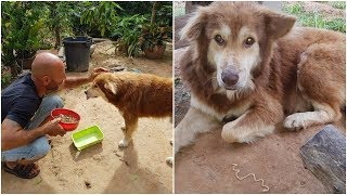 Download His owner left him behind, Street dog attacked him so he lost trust in everyone Video