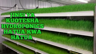 Download Jinsi ya Kuotesha Hydroponics Fodder /Chakula cha Kuku Video