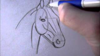 Download How to draw a simple horsehead Video
