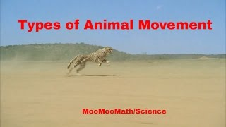 Download Life Science-Types of Animal Movement Video