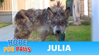 Download Julia: a wolf? a coyote? a dog? This rescue is a MUST SEE! Video