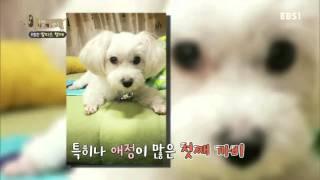 Download 세상에 나쁜 개는 없다 - 위험한 말티즈 형제 #001 Video