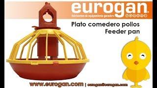 Download Plato comedero para pollos EUROGAN / Broiler feeder pan EUROGAN Video