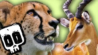 Download Cheetah vs Gazelle | Deadliest Showdown (Ep 3) | Earth Unplugged Video