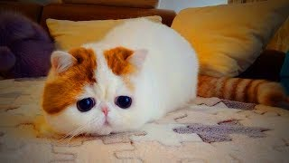 Download Cute Funny Kittens 😜🐱 Funny Cats (Part 1) [Funny Pets] Video