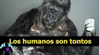 Download 3 Animales que hablaron y dejaron tristes mensajes a la humanidad Video