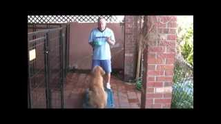 Download Practicing Obedience Training skills that will transfer to REAL WORLD! Video