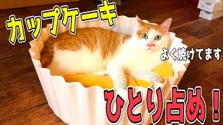 Download 猫たちのためにカップケーキを焼いたら寝床になっちゃいました Video